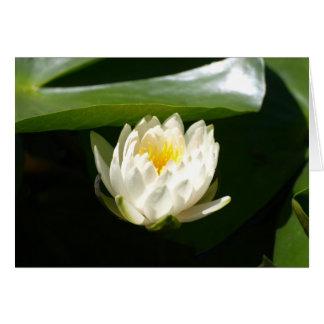 Waterlily sublime tarjeta de felicitación