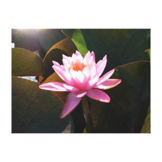 Waterlily Sunlit Impresión En Lienzo