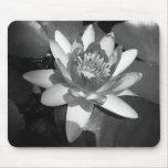Waterlily Tapetes De Raton