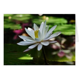Waterlily - tarjeta en blanco