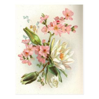waterlily tarjetas postales