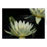 Waterlily Tarjeton