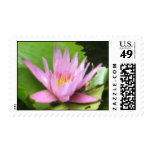 Waterlily (watercolor) stamp