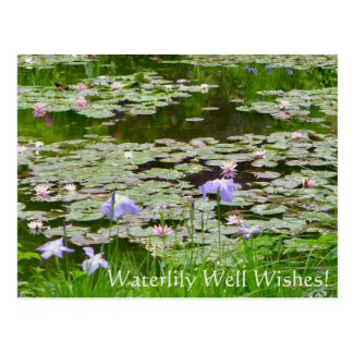 Waterlily Well Wishes! Postcard