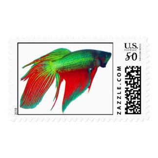 Watermelon Betta First Class Postage Stamp