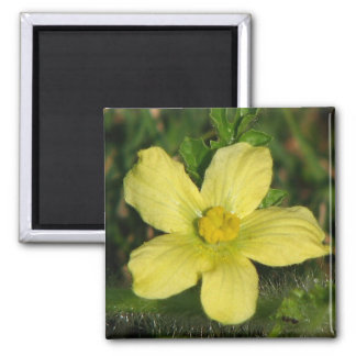 Watermelon Bloom 2 Inch Square Magnet