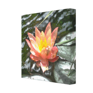 Watermelon Water Lily Canvas Print