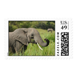 Waters Collection-Elephant Postage