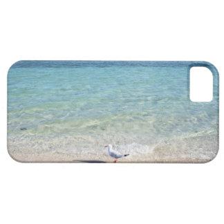 Water's edge iPhone SE/5/5s case