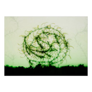 Waterweed circle poster