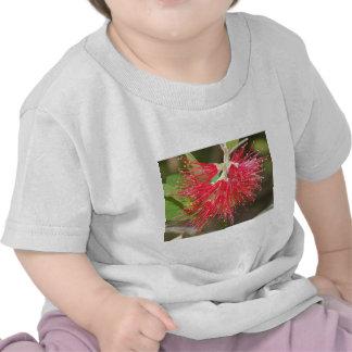 Wattle Fireworks T Shirt