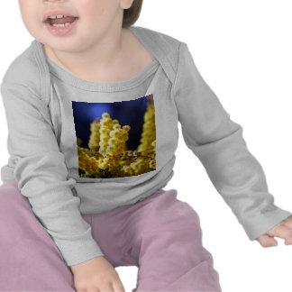Wattle Tshirt