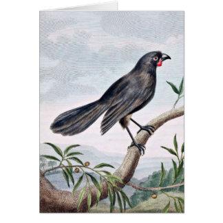 Wattlebird Vintage Bird Illustration Card