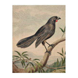 Wattlebird Vintage Bird Illustration Wood Wall Art
