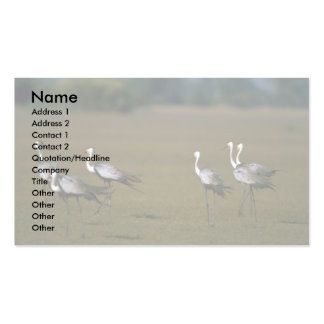 Wattled Cranes Double-Sided Standard Business Cards (Pack Of 100)