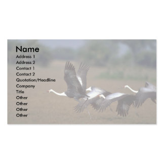 Wattled Cranes, taking off Double-Sided Standard Business Cards (Pack Of 100)