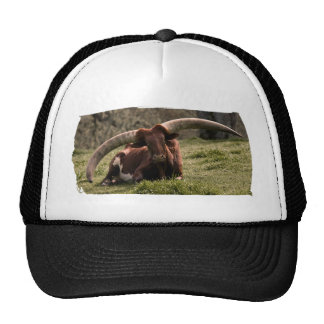 Watusi Cow Trucker Hat