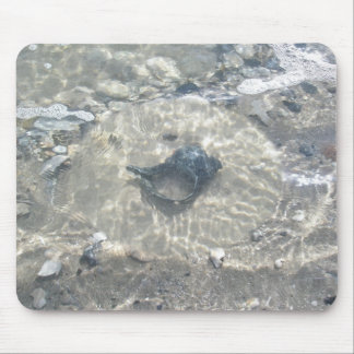 Wave-Washed Black Conch Seashell Mouse Pad