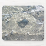 Wave-Washed Black Conch Seashell Mouse Pads