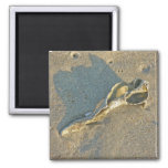 Wave-Washed Shell Cape Cod Items Magnet