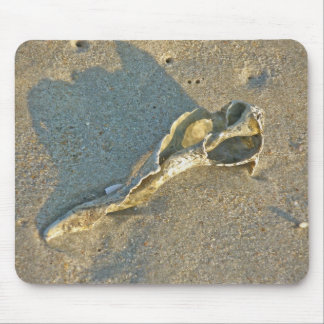Wave-Washed Shell Cape Cod Items Mouse Pad