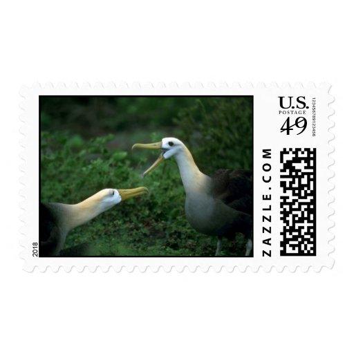 Waved Albatross In Courtship Stamps