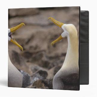 Waved albatross Phoebastria irrorata) pair in Binder