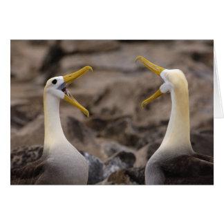 Waved albatross Phoebastria irrorata) pair in Greeting Card