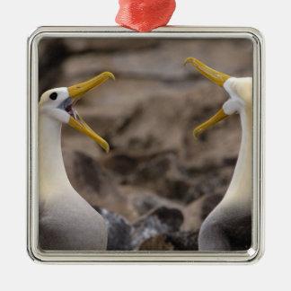Waved albatross Phoebastria irrorata) pair in Metal Ornament