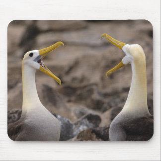 Waved albatross Phoebastria irrorata) pair in Mouse Pad