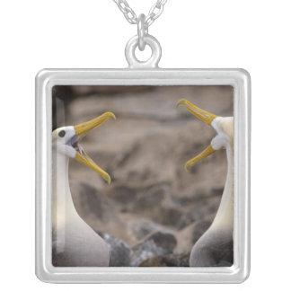 Waved albatross Phoebastria irrorata) pair in Square Pendant Necklace