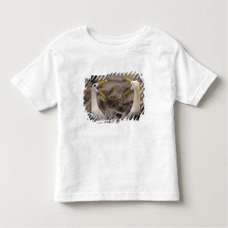 Waved albatross Phoebastria irrorata) pair in T-shirt