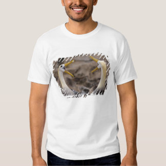 Waved albatross Phoebastria irrorata) pair in T Shirt