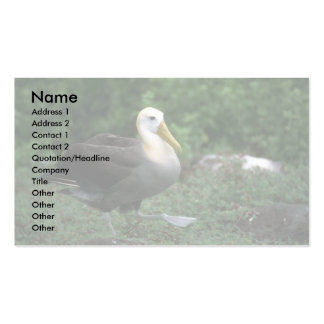 Waved Albatross Walking Double-Sided Standard Business Cards (Pack Of 100)
