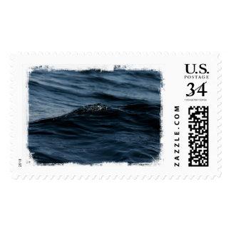 Wavelet Postage