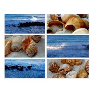 waves and shells Postcard