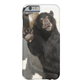 Waving Bear Barely There iPhone 6 Case