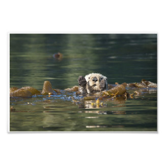 Waving otter art photo