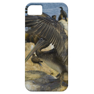 Waving Pelican - Barely There iPhone SE/5/5s Case