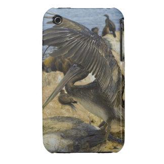 Waving Pelican iPhone 3G/3GS Casemate Case