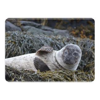 Waving Seal 5x7 Paper Invitation Card