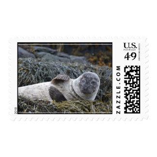 Waving Seal Stamp