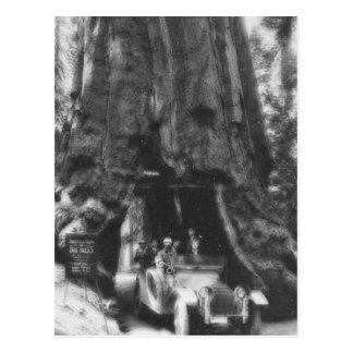 Wawona Tree Magic Lantern Vintage California Post Card