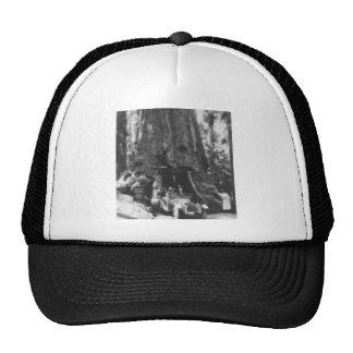 Wawona Tree Magic Lantern Vintage California Trucker Hat