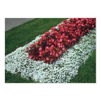 "Wax Begonia (Begonia) flowers 5"" X 7"" Invitation Card"