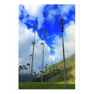 Wax palms Cocora valley Colombia Postcard