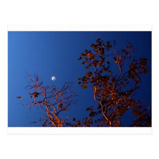 WAXING CRESEBT MOON & GUM TREE AUSTRALIA POSTCARD