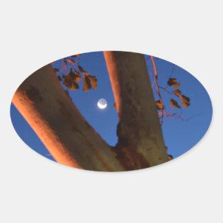 WAXING MOON AND GUM TREE QUEENSLAND AUSTRALIA OVAL STICKER