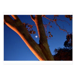 WAXING MOON AND GUM TREE QUEENSLAND AUSTRALIA POSTCARD