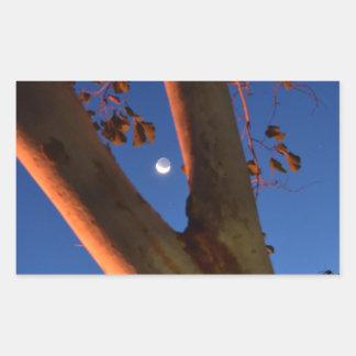 WAXING MOON AND GUM TREE QUEENSLAND AUSTRALIA RECTANGULAR STICKER